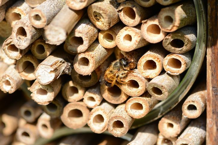 Les abeilles solitaires : 8 faits à connaître et une aide à l'identification