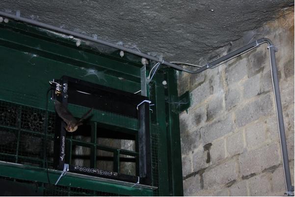 Transformez votre BatCounter en piège photographique pour le suivi des chauves-souris !